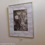 Tiere im Märchen - Fotoausstellung